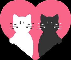pattounes-chats-vierzon-amour